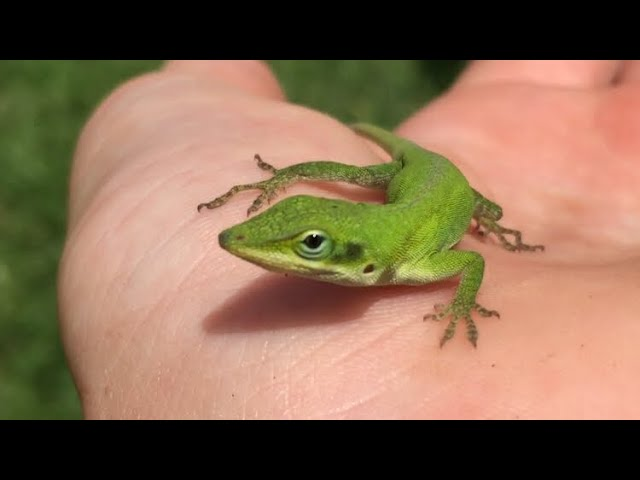 How To Catch Reptiles And Amphibians In Your Backyard ...